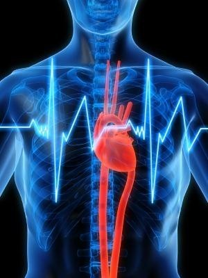 wass heart 4