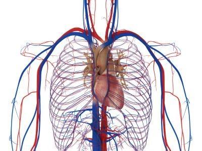 wass heart5
