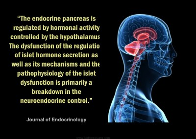 #11 The Endocrine System