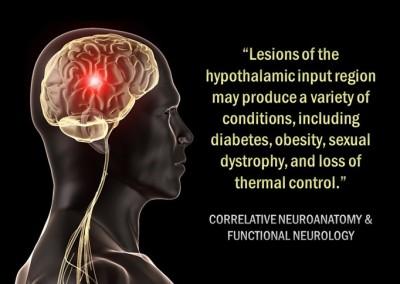 #10 Homeostasis and Diabetes