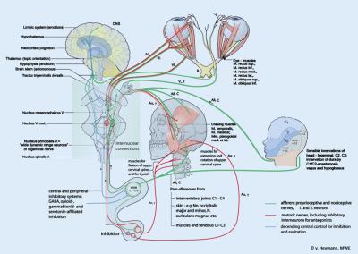 Upper Neck Nerves